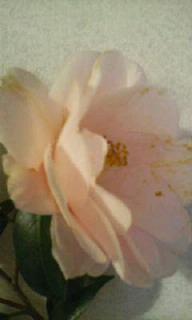 image/shion7yu-2006-03-06T08:09:37-1.jpg