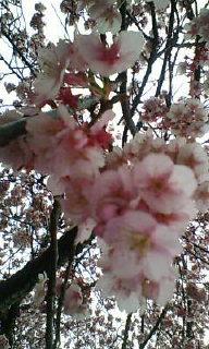image/shion7yu-2006-03-06T18:36:37-1.jpg
