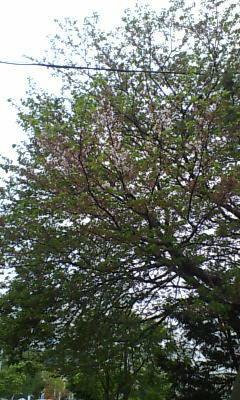 image/shion7yu-2006-04-20T08:25:21-1.jpg
