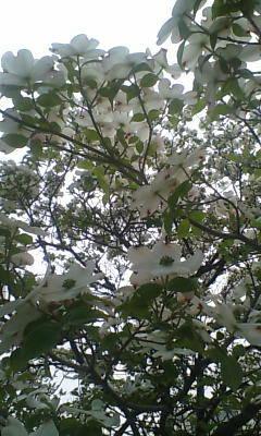 image/shion7yu-2006-04-23T18:16:19-1.jpg