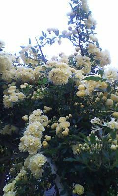 image/shion7yu-2006-04-23T18:19:22-1.jpg