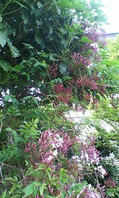 image/shion7yu-2006-05-04T21:32:33-1.jpg